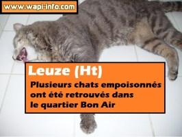 Leuze (Ht) : un empoisonneur de chats au quartier Bon Air ?