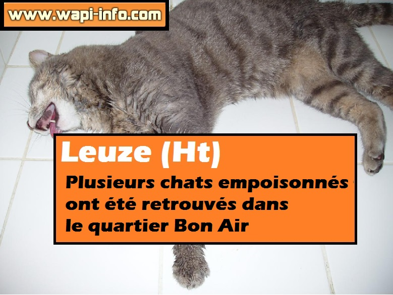 leuze chats empoisonne 01