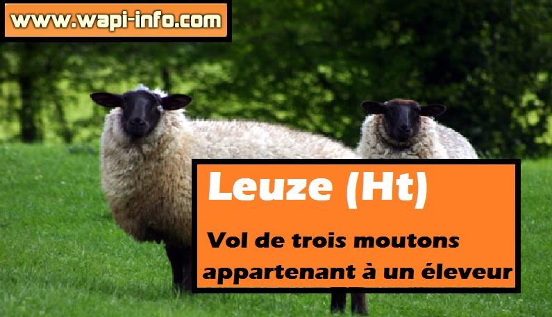 leuze vol mouton