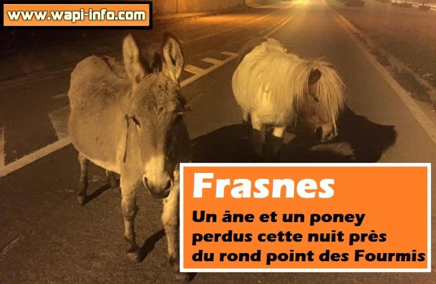 Ane et Poney Frasnes
