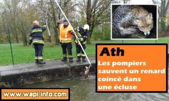 Ath : les pompiers sauvent un renard coincé dans une écluse - les réseaux sociaux émus