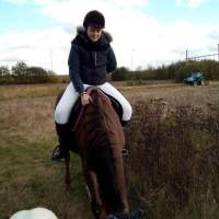 Harchies : à cheval, Océane percutée par une voiture qui a pris la fuite