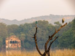 Ranthambore India