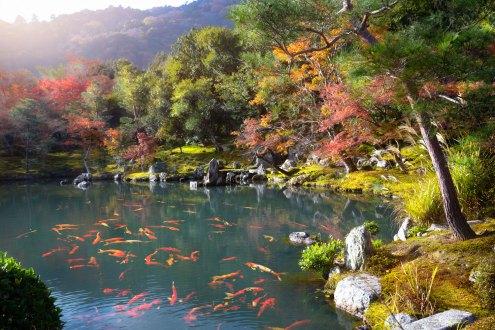 Tenryuji temple garden, Arashiyama, Kyoto