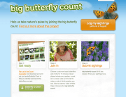 Big Butterfly Count