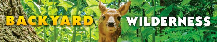 Backyard Wilderness Logo