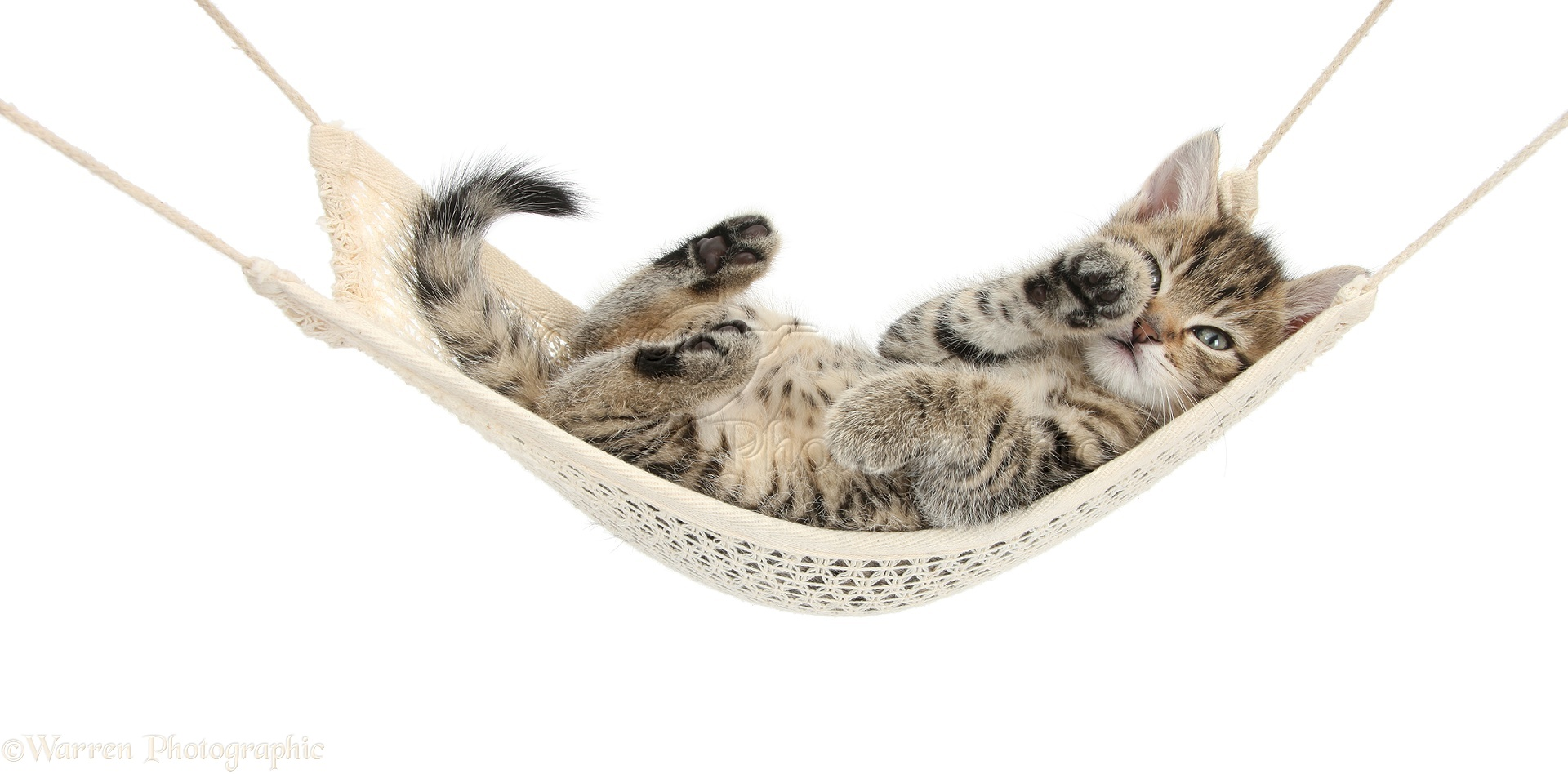 cat hammock under chair height adjustable mechanism 2 best images collections hd for gadget