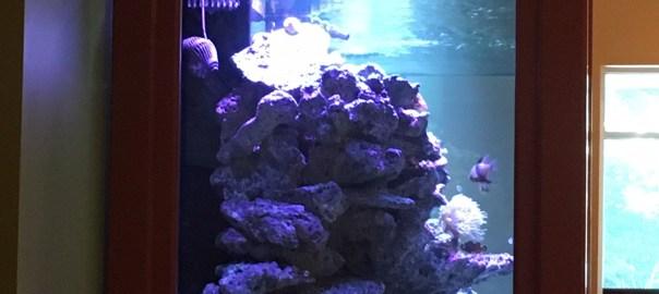 Fish Tank at Friscos