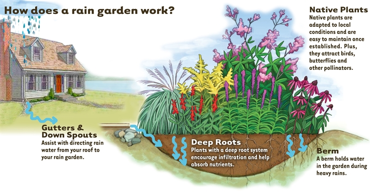 a rain garden is a shallow constructed depression to catch rainwater it contains plants that tolerate standing water for several hours if it is designed