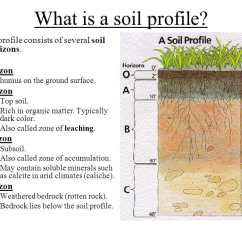 Horizon Diagram Soil Formation Venn Of Animal Cell And Plant Soils Sustain Life As The Shows Below Roots Will Be Found Mostly In Topsoil Subsoil Deeper Better Your Plants