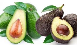 avoseedo_hass_avocado_ver_florida_avocado