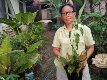 relawati jual tanaman hias mlati sleman