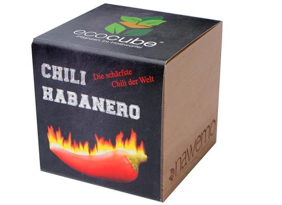Chili anbauen