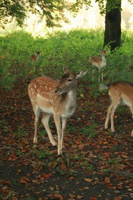 oktober_bambi