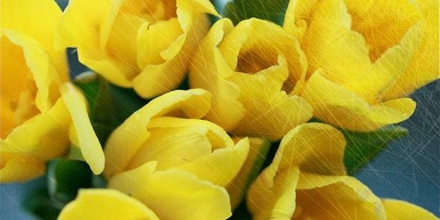 Blumen | waseigenes.com