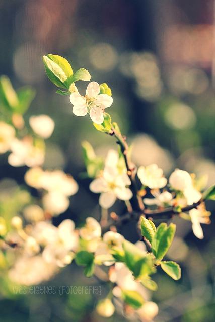 Frühling | waseigenes.com
