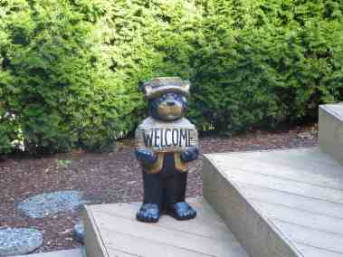 no-bears-except-this-one