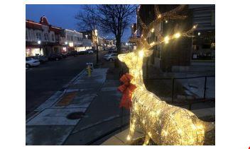 Deer in Jackson