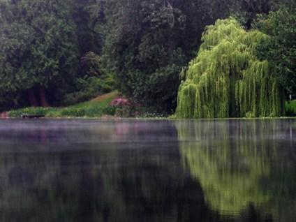 Shoreline_Echo_Lake_T_Downer