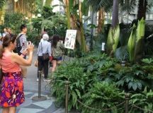 A Corpse Flower Is Blooming in DC, And It Smells Like ...
