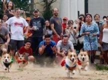 DC Dogs Archives | Washingtonian