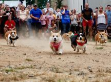 PHOTOS: Look at All These Corgis | Washingtonian