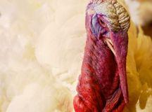 Photos: Presidential Turkeys at DC's Willard Hotel ...
