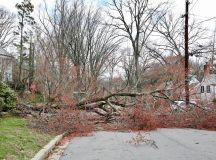 Friday's Crazy DC Wind Storm, in Photos | Washingtonian
