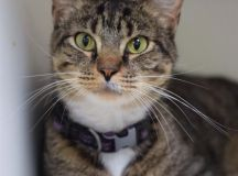 The Humane Rescue Alliance Will Waive All Adoption Fees This Weekend images 1