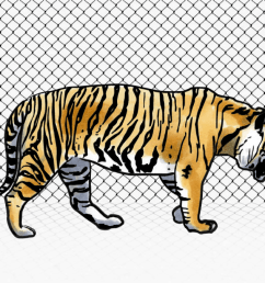 captive tigers soon outnumbered those in the wild as habitat loss accelerated and a supply chain of poaching and farming spread across the continent  [ 1200 x 675 Pixel ]
