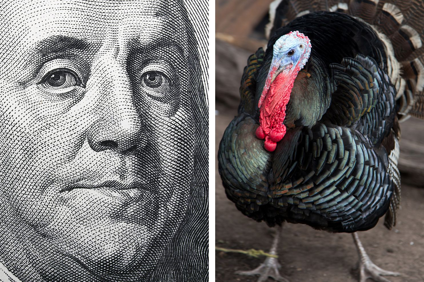 Ben Franklin Turkey Myth He Didn T Champion Turkeys As