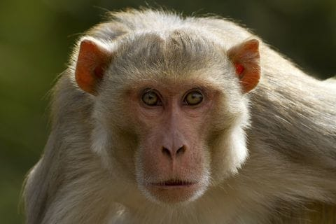 A monkey kidnapped and killed a newborn family in India