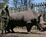 Sudan & # 39; the world's last male Northern White Rhinoceros died on age