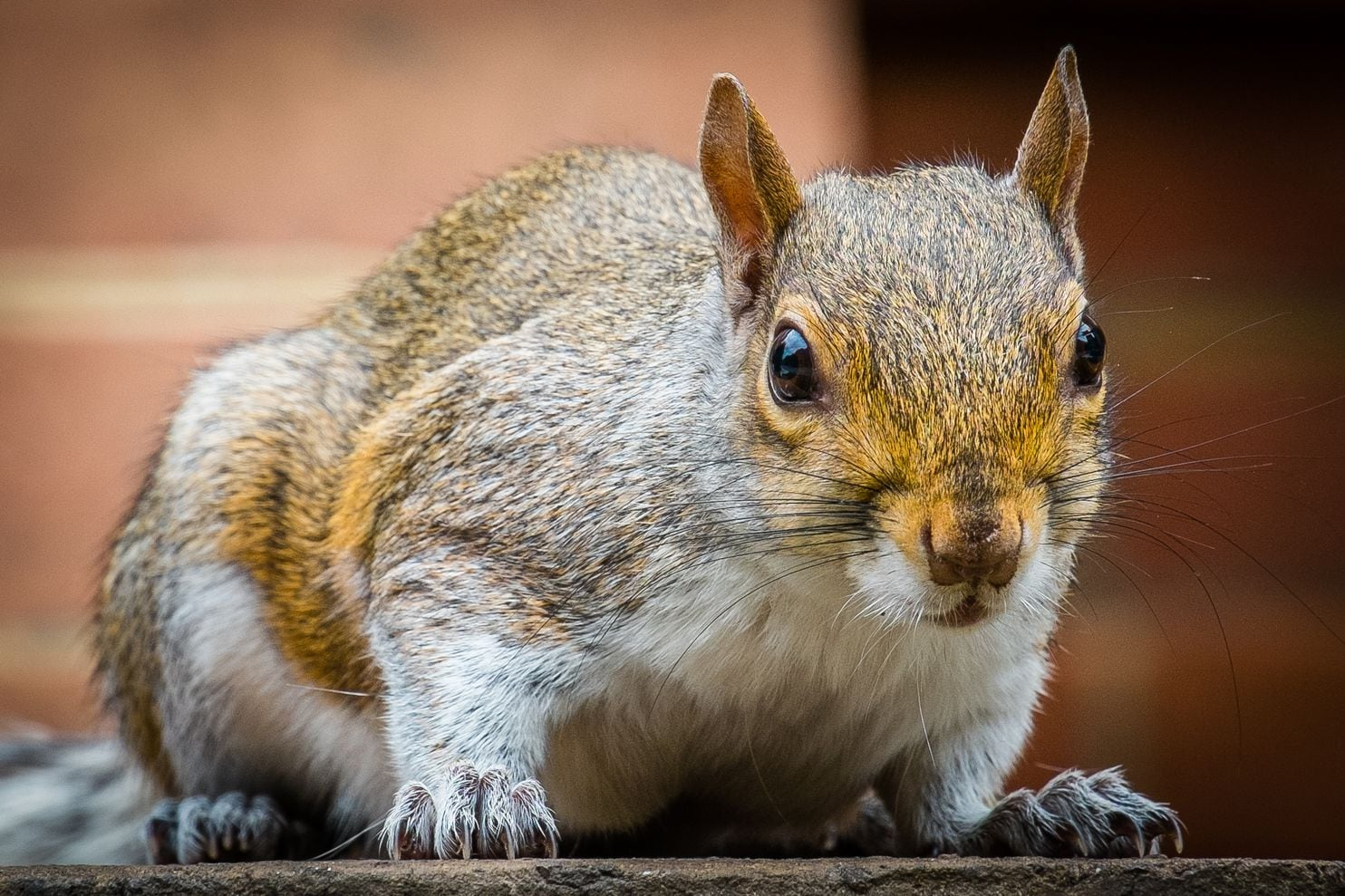 squirrels are brainy and