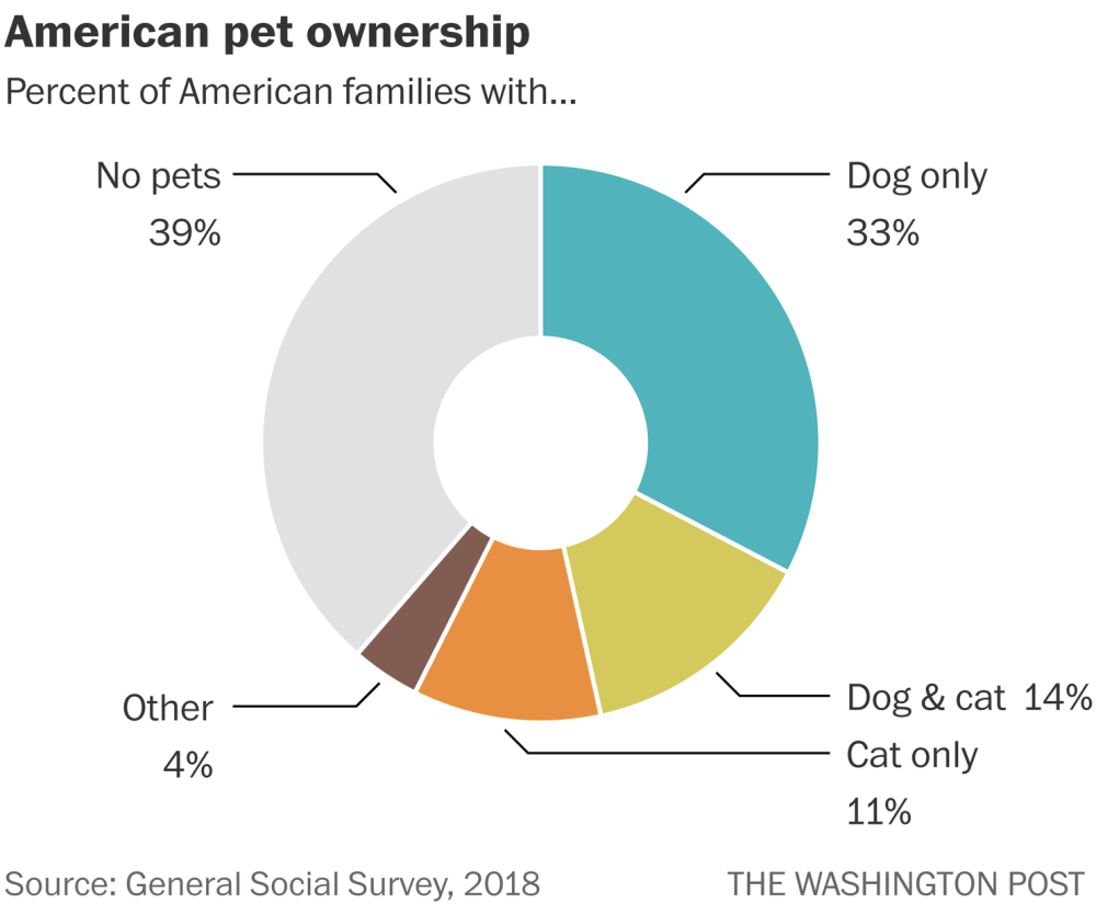 medium resolution of dog owners are much happier than cat owners survey finds