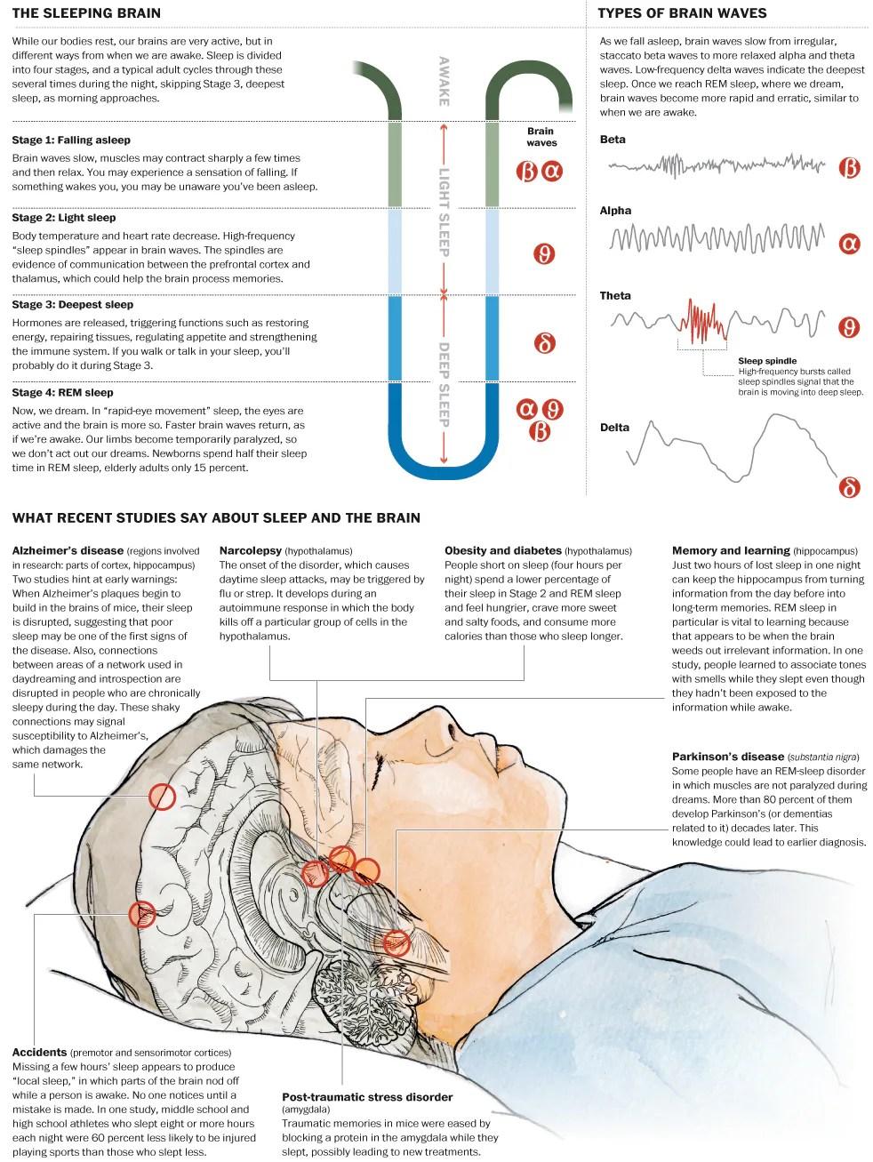 infographie cerveau et sommeil