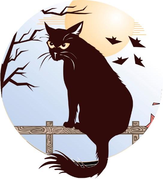 anothercat.jpg