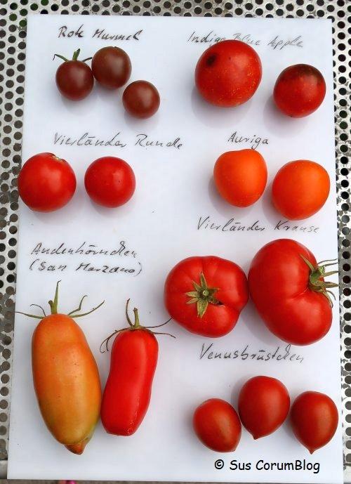 Tomaten2019_1.jpg