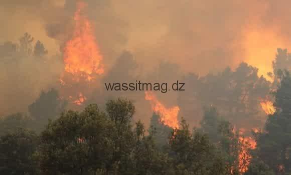 حريق غابات عين ميمون يصل إلى مشارف شيليا.. خنشلة؛ آوراس يــــــــحــــتـــرق!!