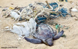How our oceans became the world's garbage dump