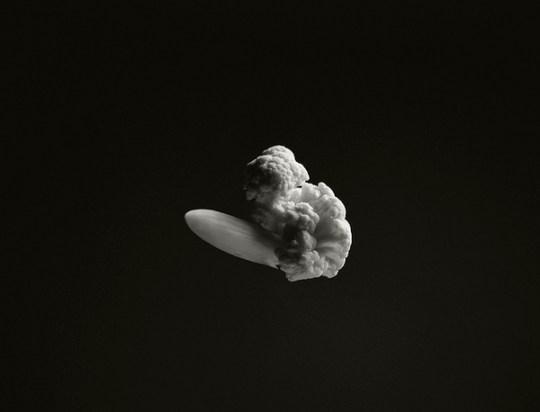 Explosies in bloemkook
