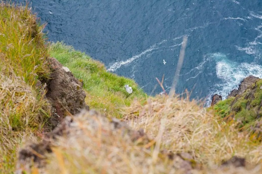 The Faroe Islands are not hard to fall in love with - here are my best photos from my recent trip to the Faroe Islands to convince you that it's true!