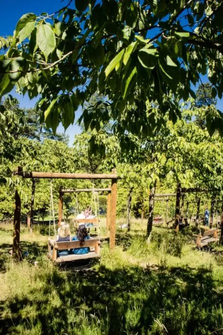 A swing in the cherry orchard at Alnwick Garden in Northumberland/