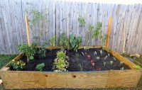 Initial Planting of Our Raised Backyard Vegetable Garden