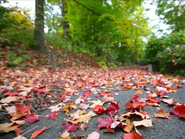 leaves_126007