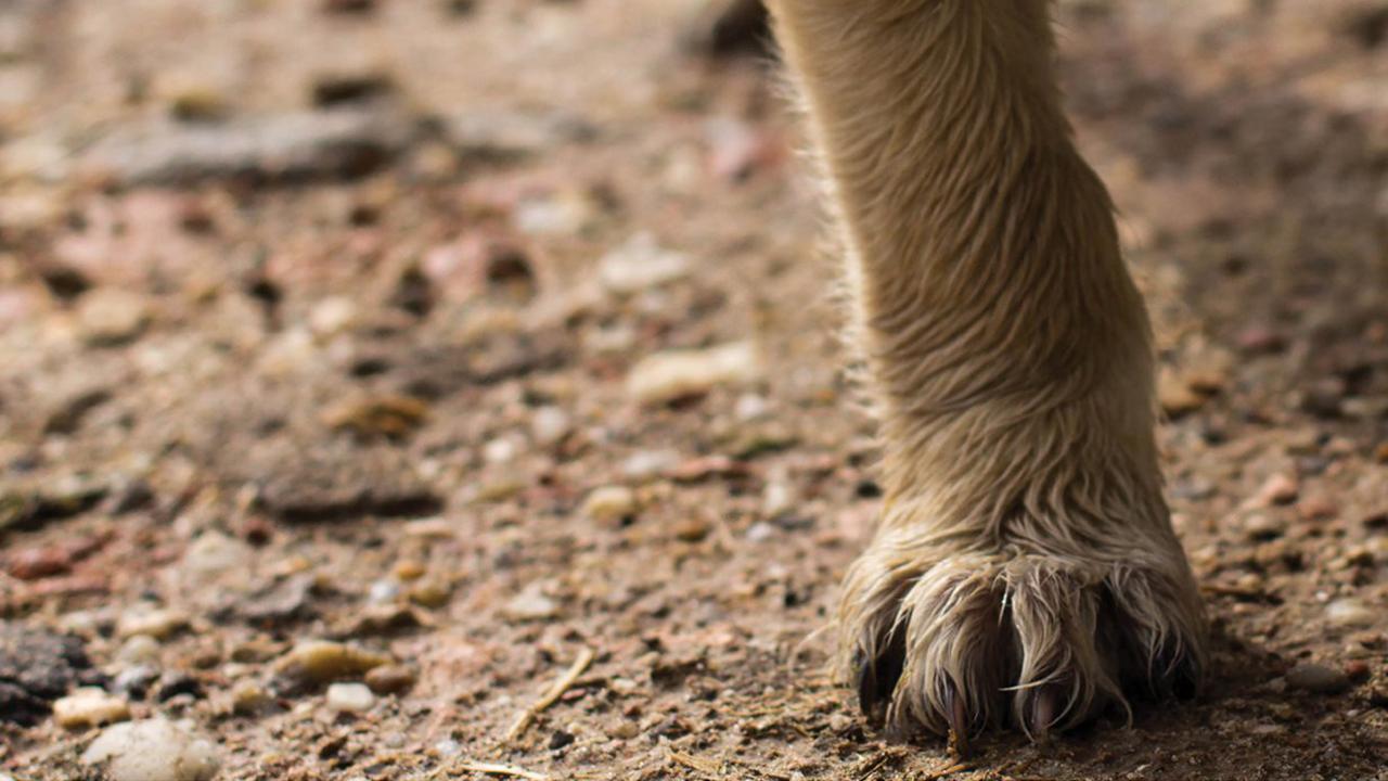 rabies-pets-dog-paw_1538411963042_404640_ver1_20181003055401-159532