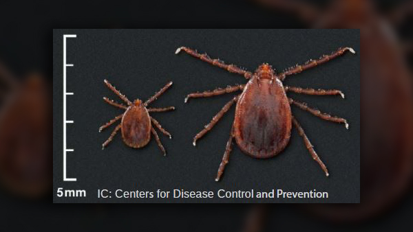 COVER PHOTO_Asian longhorned tick in Knox County_CDC_0613_1560488569542.JPG.jpg