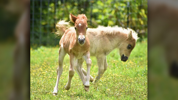 East Tennessee Miniature Horse And Donkey Rescue Hosting