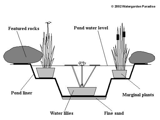 lotus in water plant diagram 2005 yamaha banshee wiring watergarden paradise aquatic nursery gardening simple garden pond