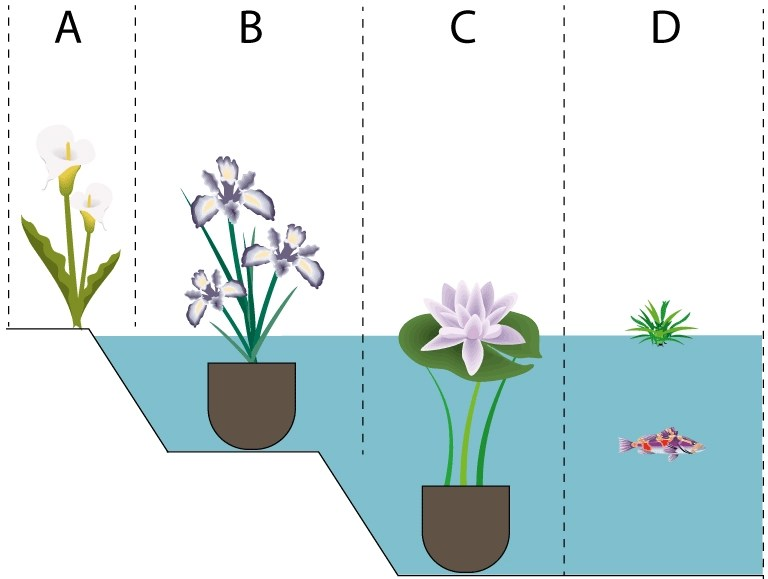 Planting scheme for ponds and lakes